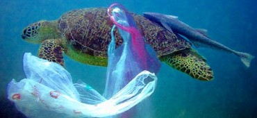 SAY NO THANKS TO PLASTIC BAGS!